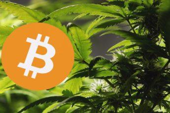 Come le criptovalute aiutano l'industria della Cannabis